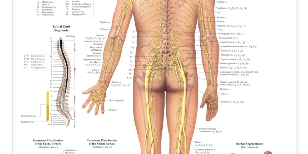carlsbad-chiropractor-spinal-stress-treatment